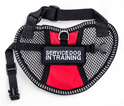 Service Dog Vests And Patches Service Dog in Training Vest