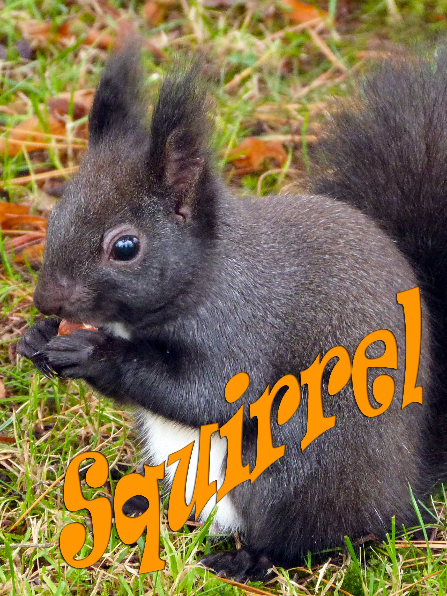 Clip: Squirrel on Amazon Prime Instant Video UK