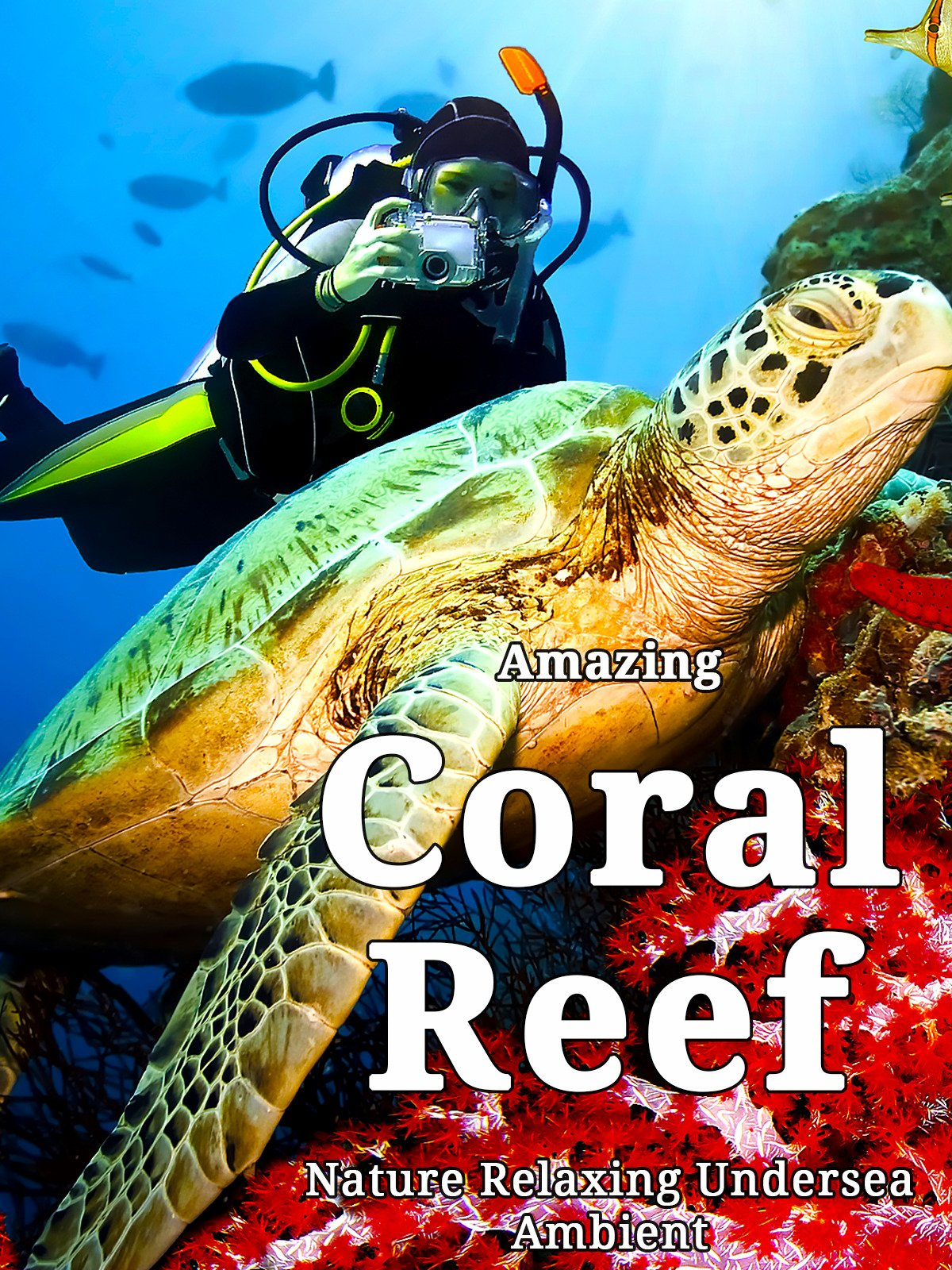 Amazing Coral Reef Nature