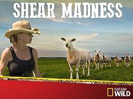Shear Madness Season 1