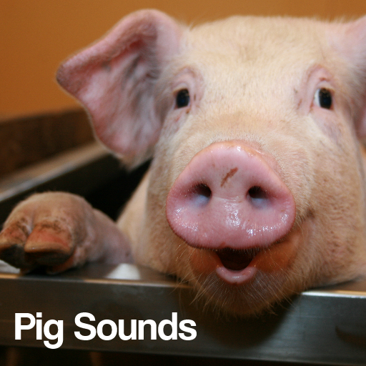 Pig Sounds: Amazon.co.uk: Appstore for Android
