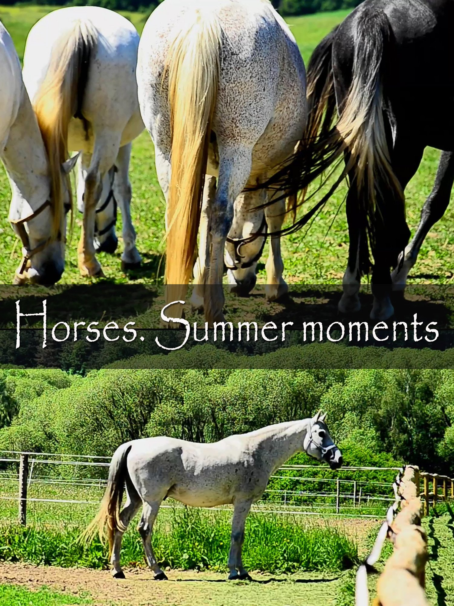 Horses. Summer moments on Amazon Prime Instant Video UK