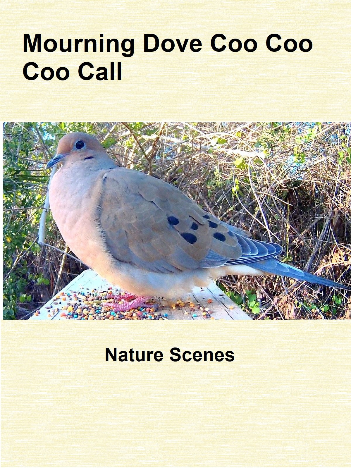 Mourning Dove Coo Coo Coo Call