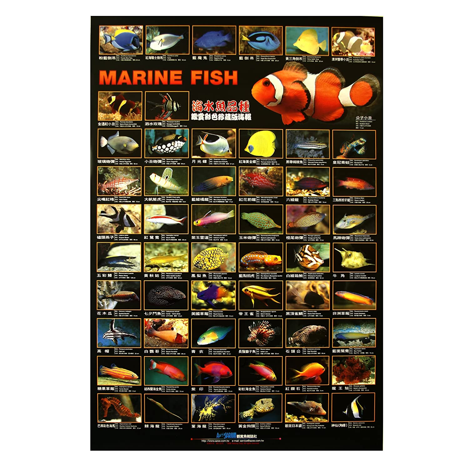 Tropical fish chart poster for Fish and pet store