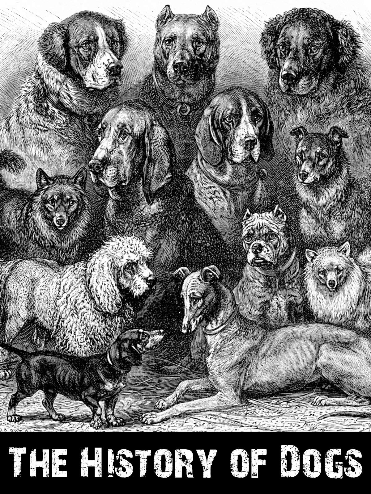 The History Of Dogs on Amazon Prime Instant Video UK