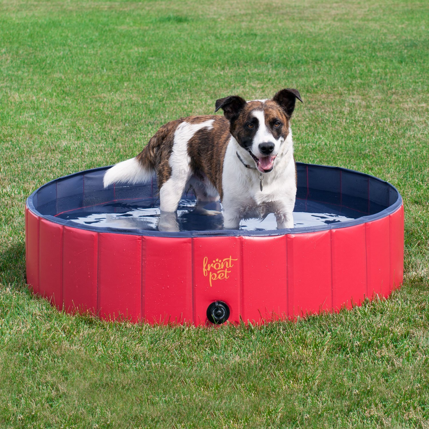 Pools For Dogs Reviews The Pool Cleaner Expert