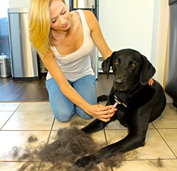 best-brush-for-german-shepherd