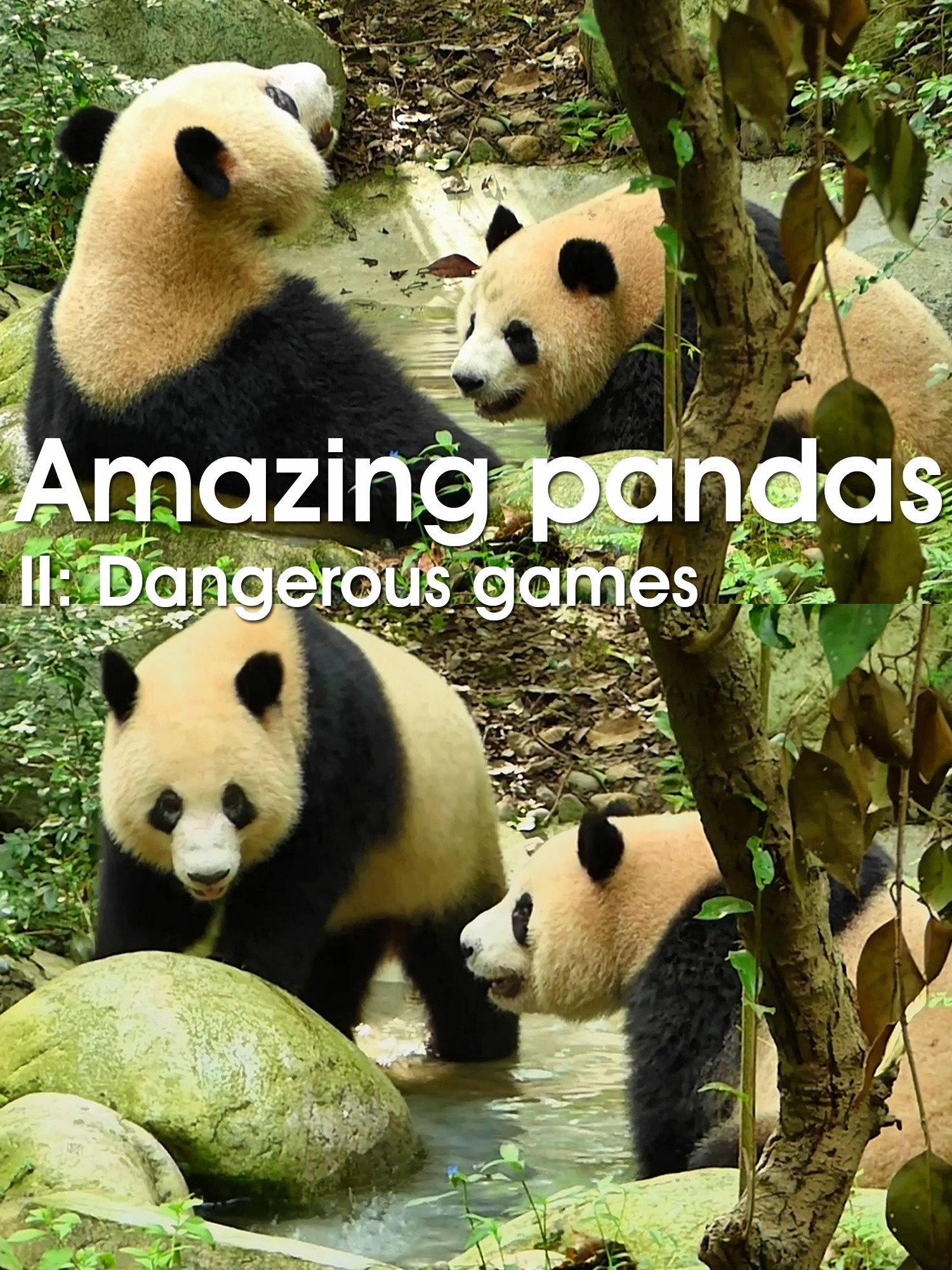 Amazing pandas. II. Dangerous games