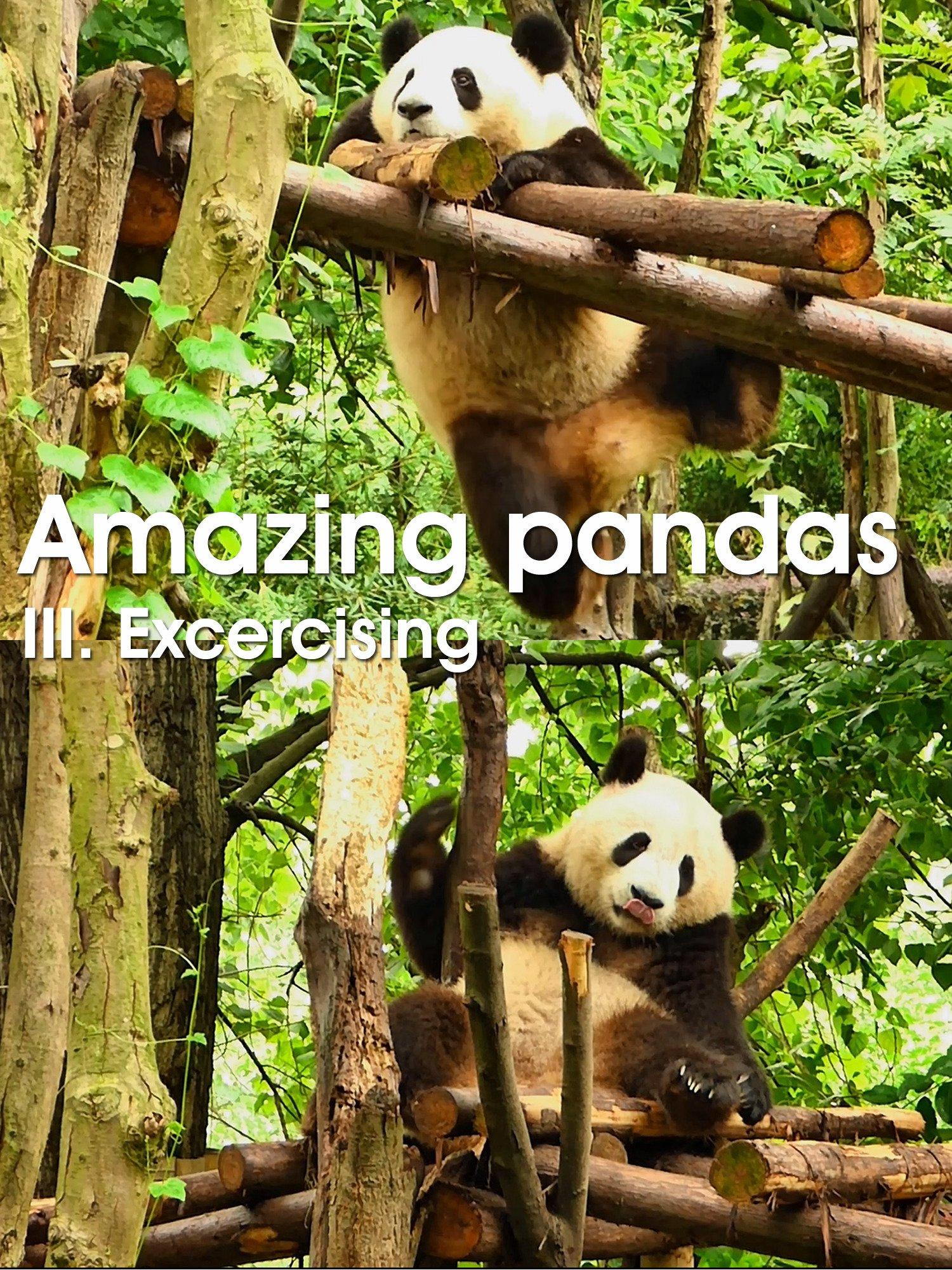Amazing pandas. III. Excercising