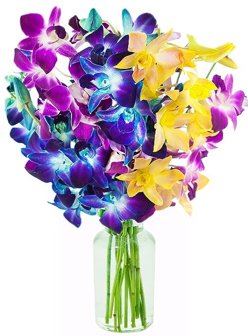 Kabloom 10 Stems Honeymoon | Blue/Fuchsia & Yellow Orchids | Vase | 2.5 Pound