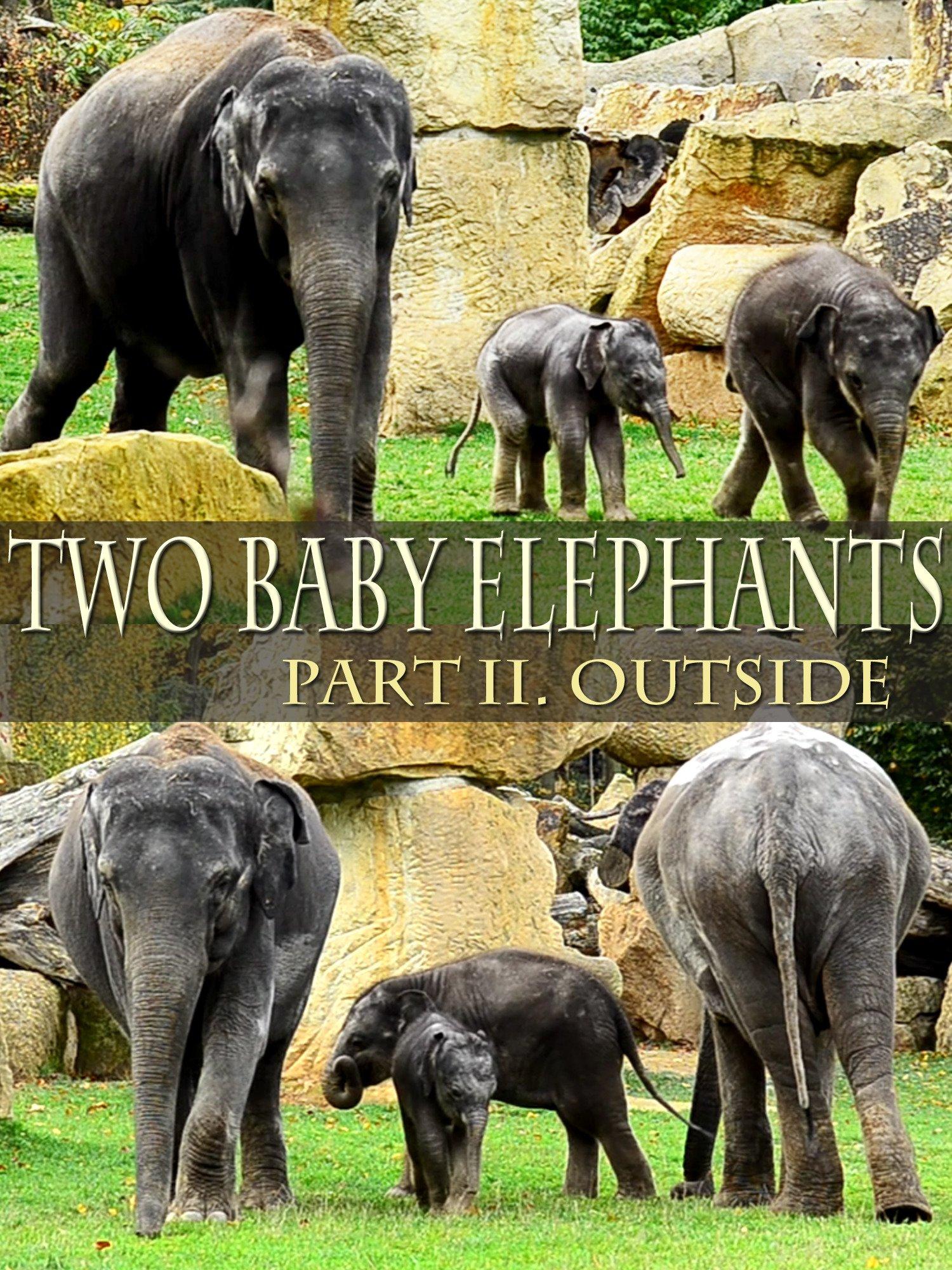 Two Baby Elephants, Part II: Outside