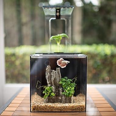Best betta fish tanks reviews 2017 guides aquarium adviser for Betta fish tanks with filter