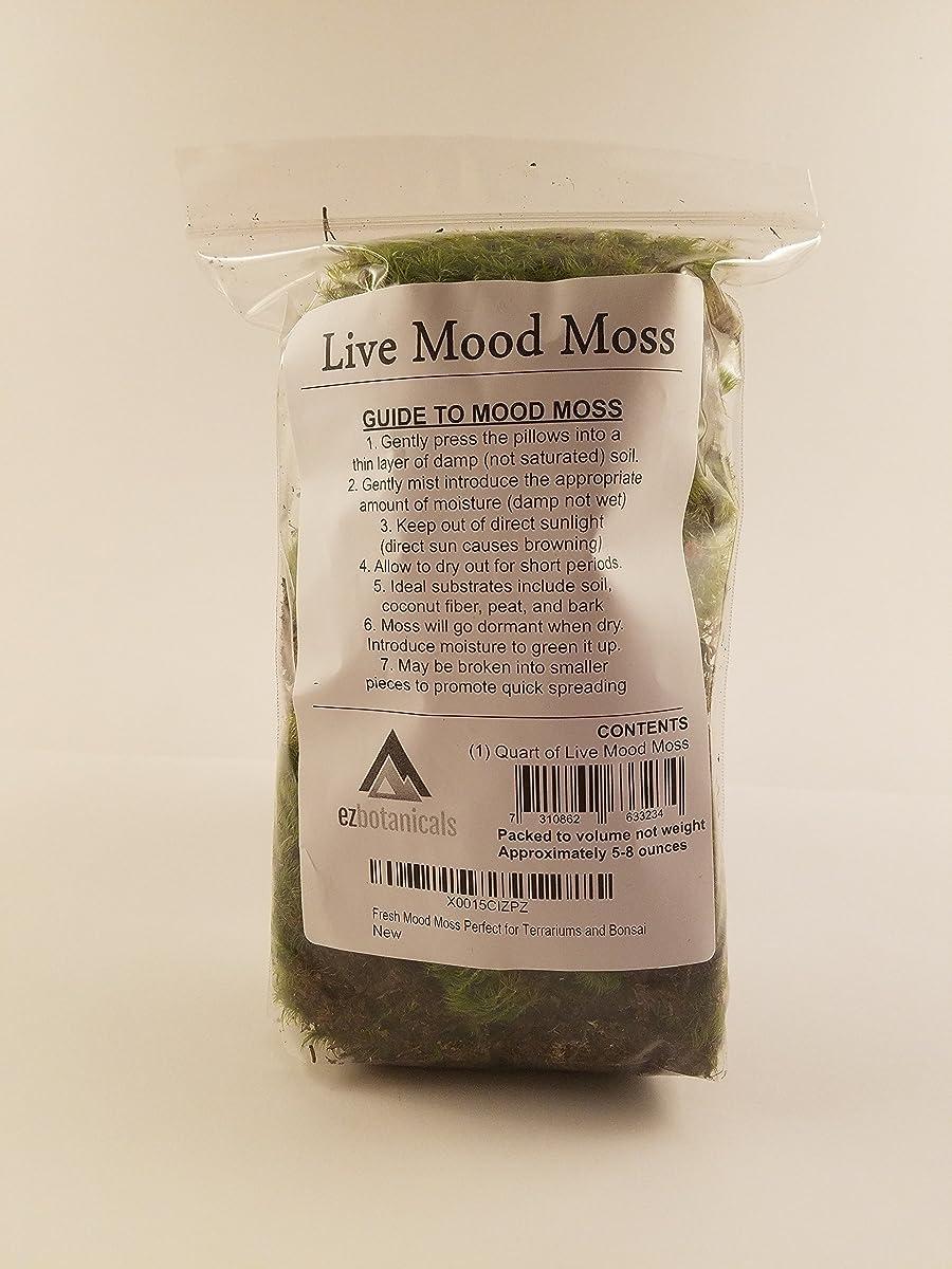 Fresh Mood Moss Perfect for Terrariums and Bonsai