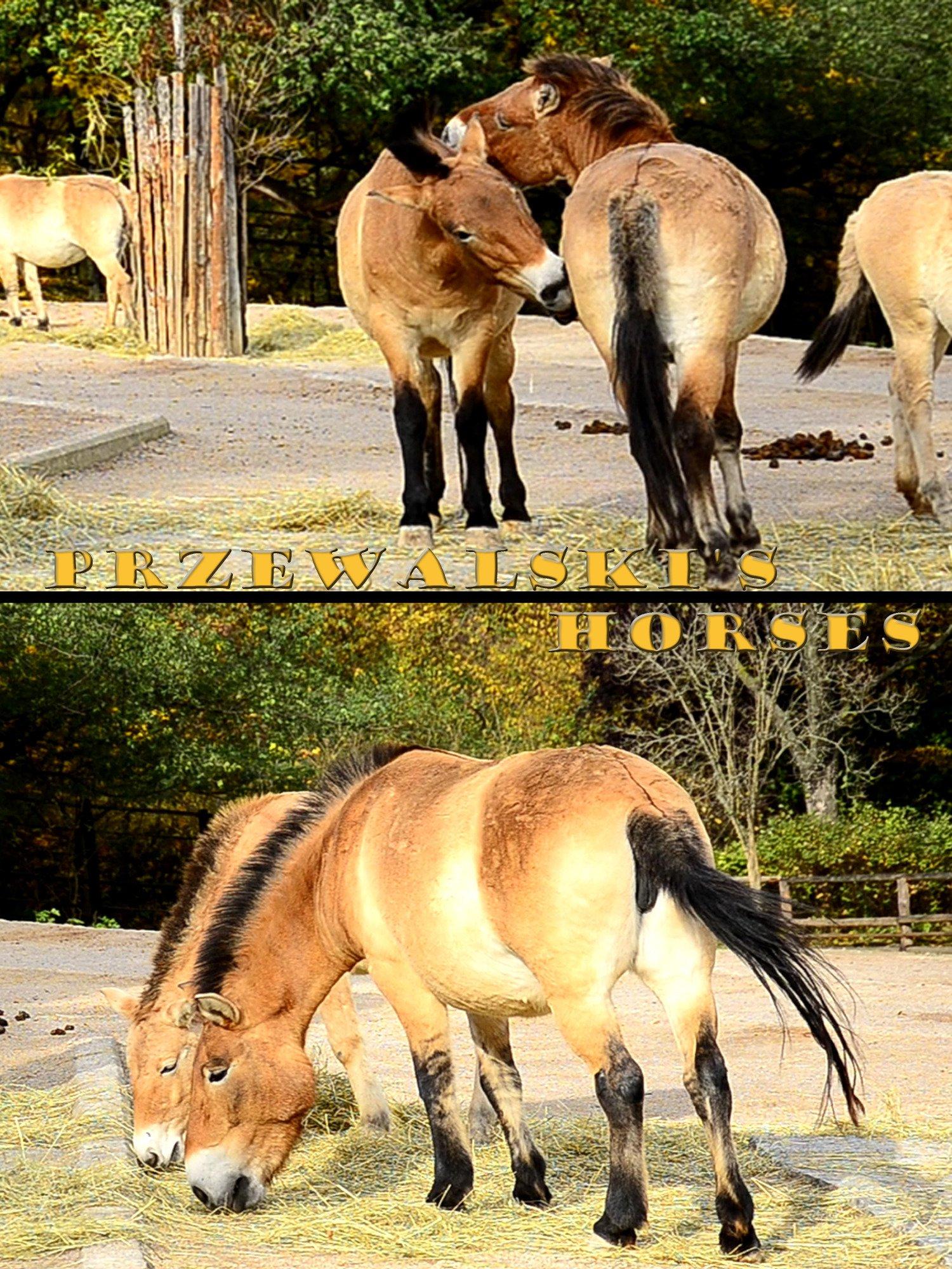 Przewalski's horses on Amazon Prime Instant Video UK