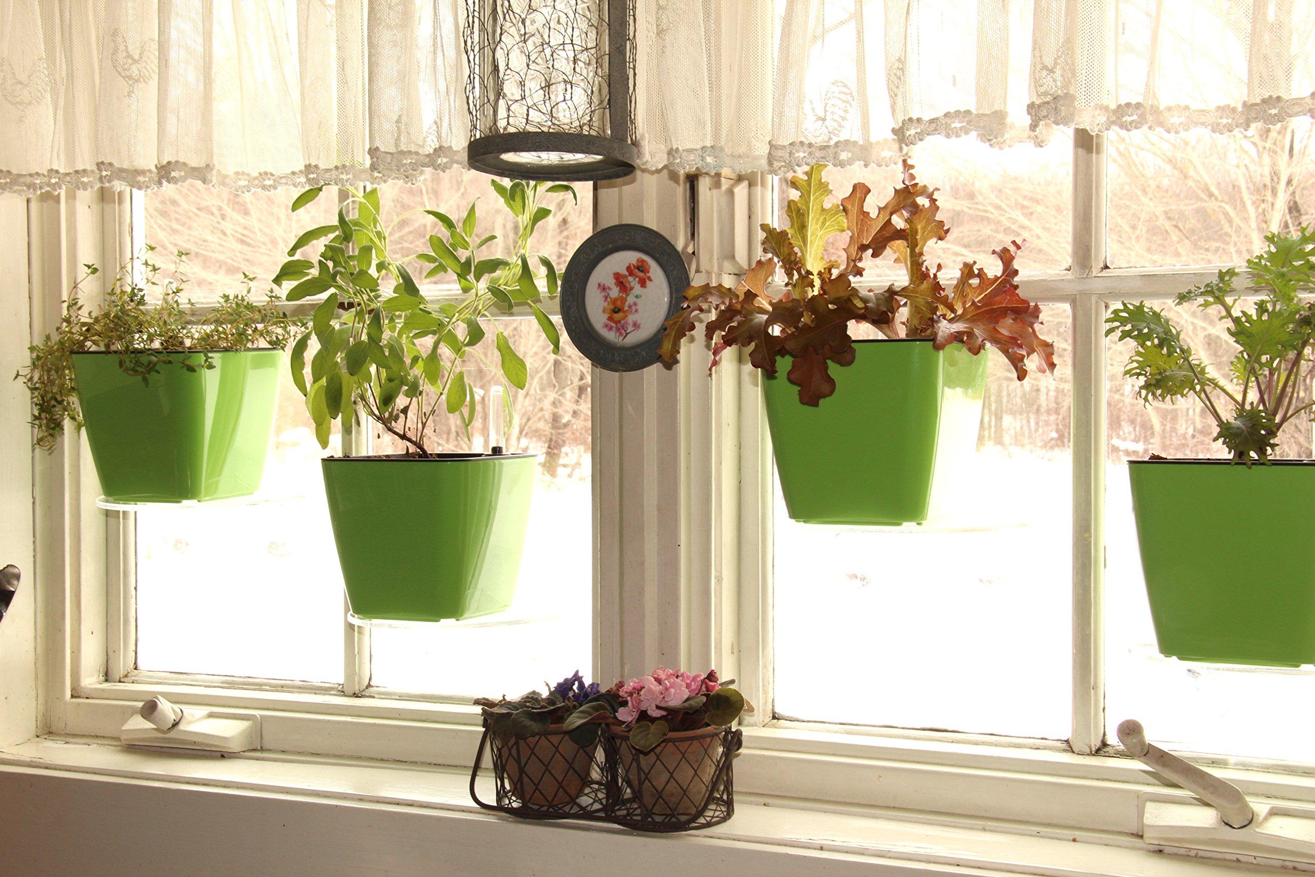 Чем удобряют цветы в домашних условиях