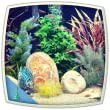 Tropical fish aquarium : colourful tank