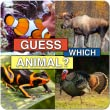 Guess Which Animal?