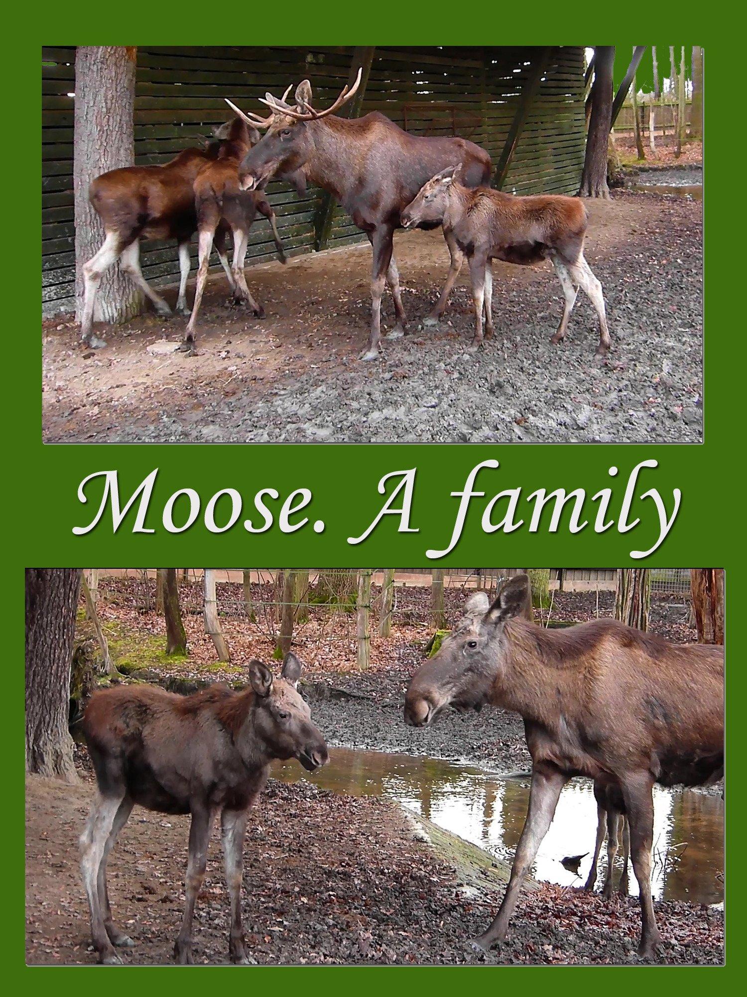 Moose. A family