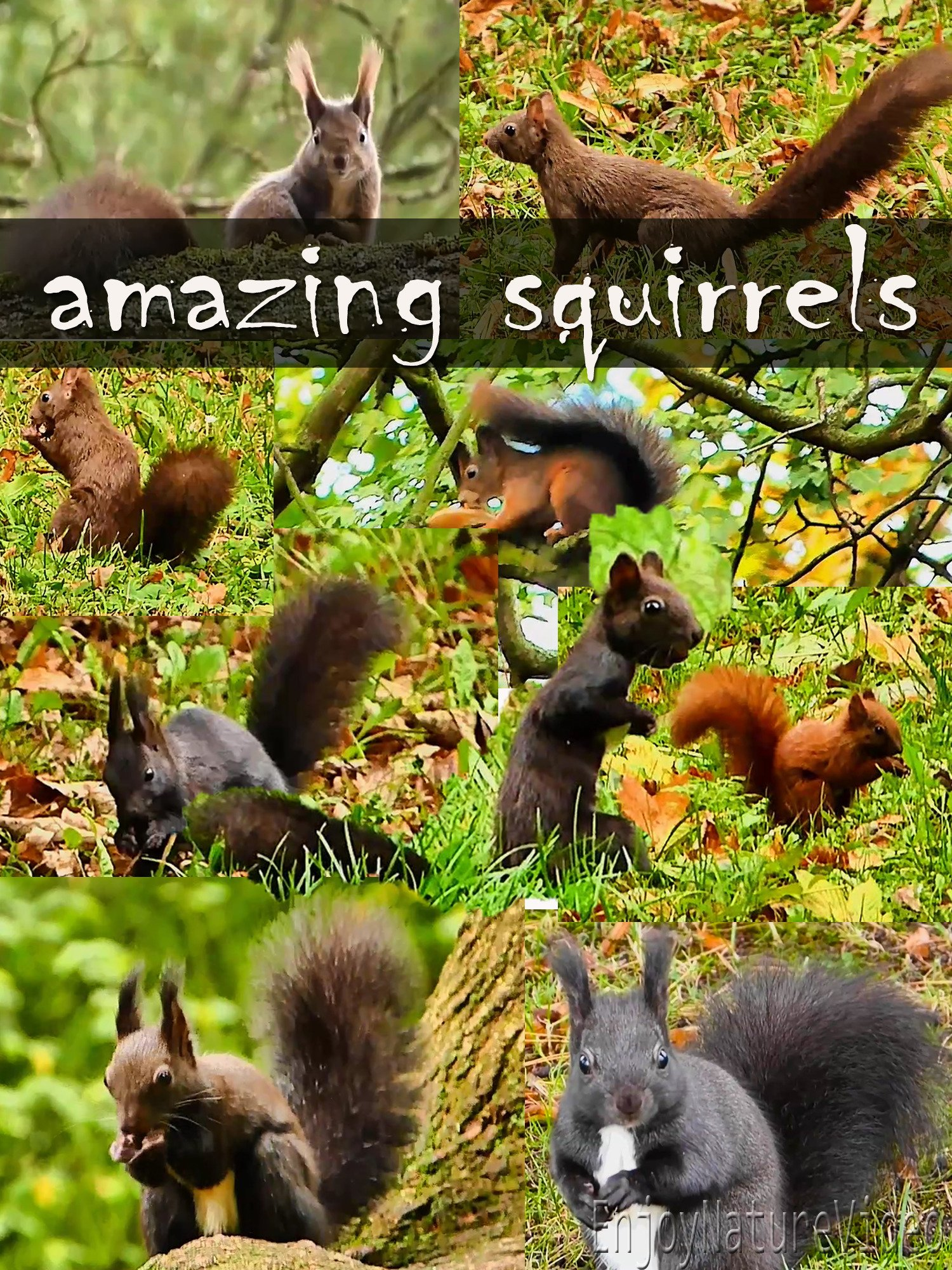 Amazing squirrels