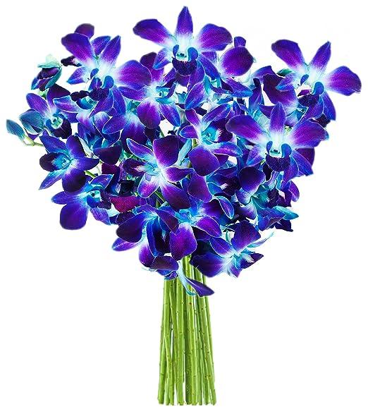 Blue Orchid Bouquet | 10 Stems