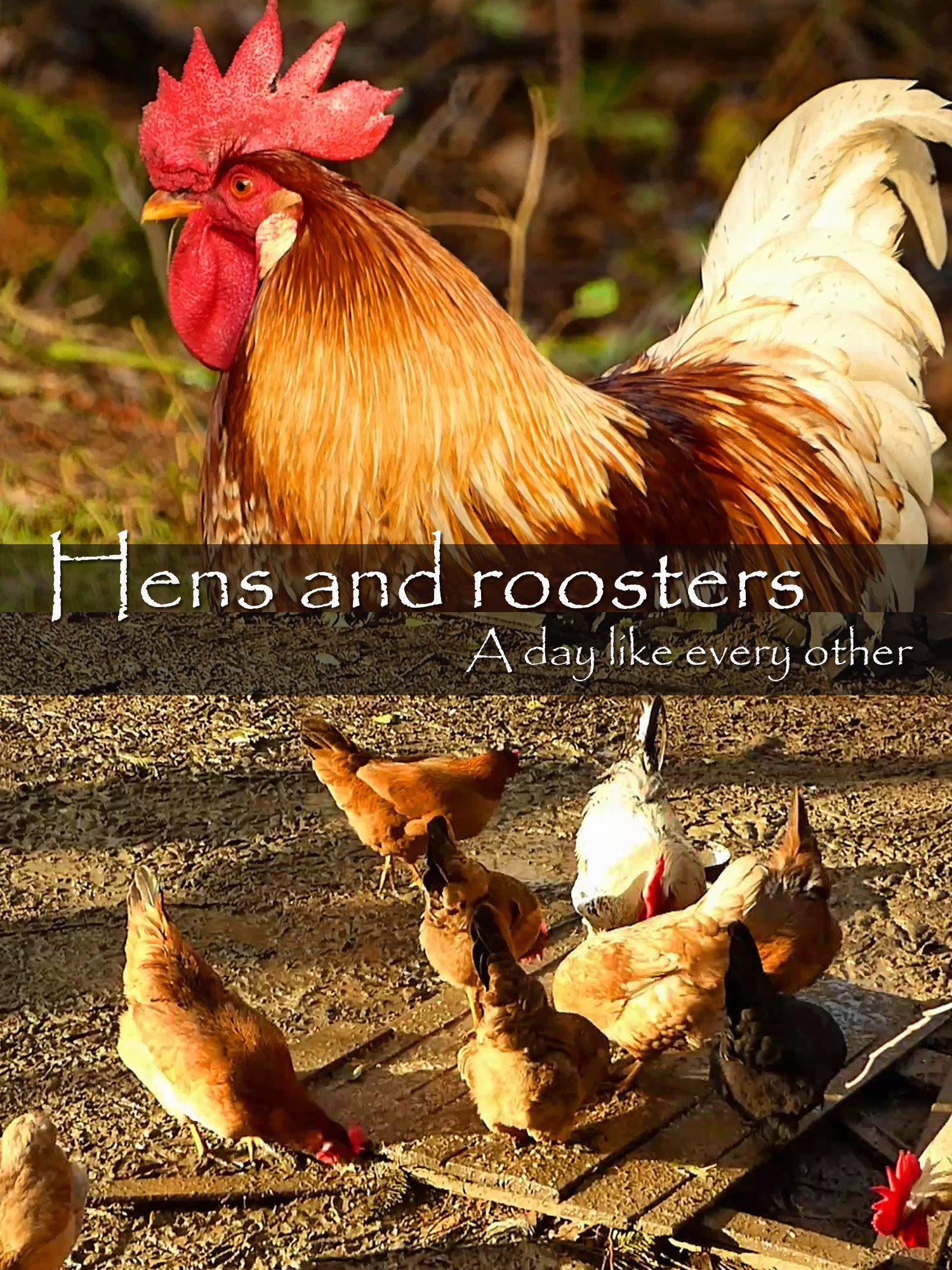 Hens and roosters. A day like every other on Amazon Prime Instant Video UK