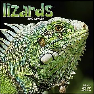 Lizard Calendar - 2016 Wall calendars - Animal Calendar - Monthly Wall Calendar by Avonside