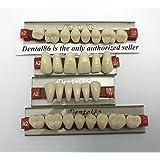 Dental Acrylic Resin Teeth Denture For Halloween Horror Prop by smiledt