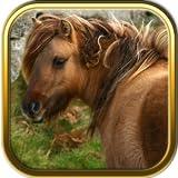 Pony Jigsaw Puzzle Games