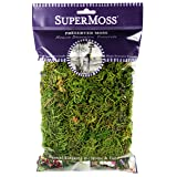 SuperMoss (25320) Forest Moss Preserved, Fresh Green, 2oz