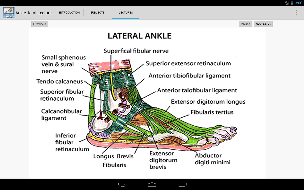 Anatomy ankle joint