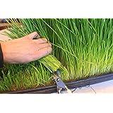 Certified Organic Wheatgrass Growing Kit - Grow & Juice Wheat Grass: Trays, Seed, Soil, Mineral Fertilizer & More