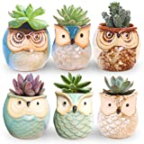 ROSE CREATE 6 Pcs 2.5 Inches Owl Pots, Little Ceramic Succulent Bonsai Pots with a Hole - Pack of 6 (Color: Owl Planters, Tamaño: Small, 2.5 inches, 6 pcs)