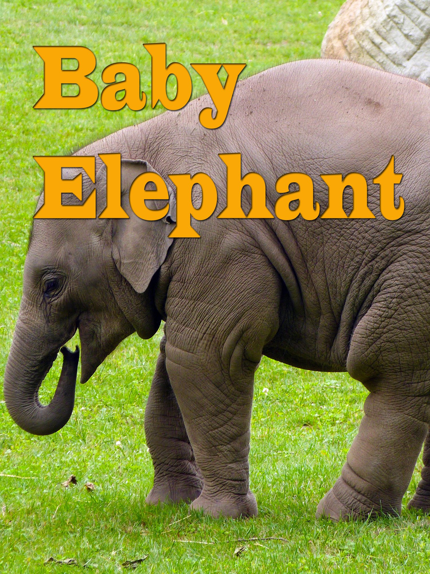 Baby Elephant on Amazon Prime Instant Video UK