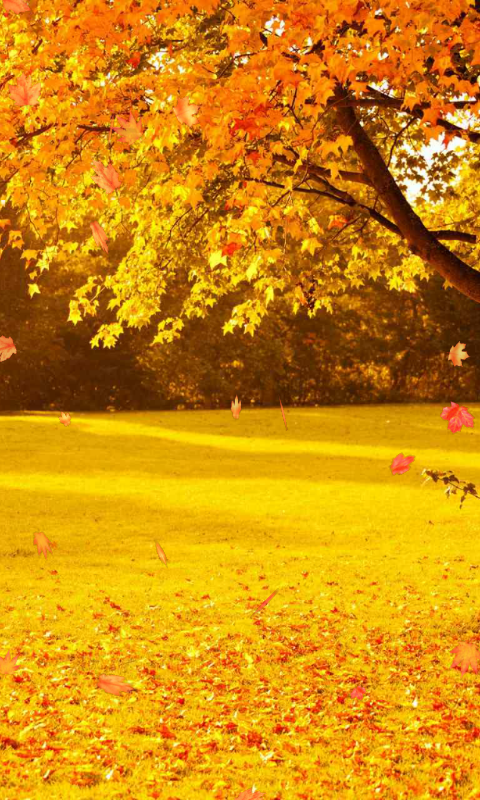 Amazon.com: Autumn Wallpaper: Appstore for Android