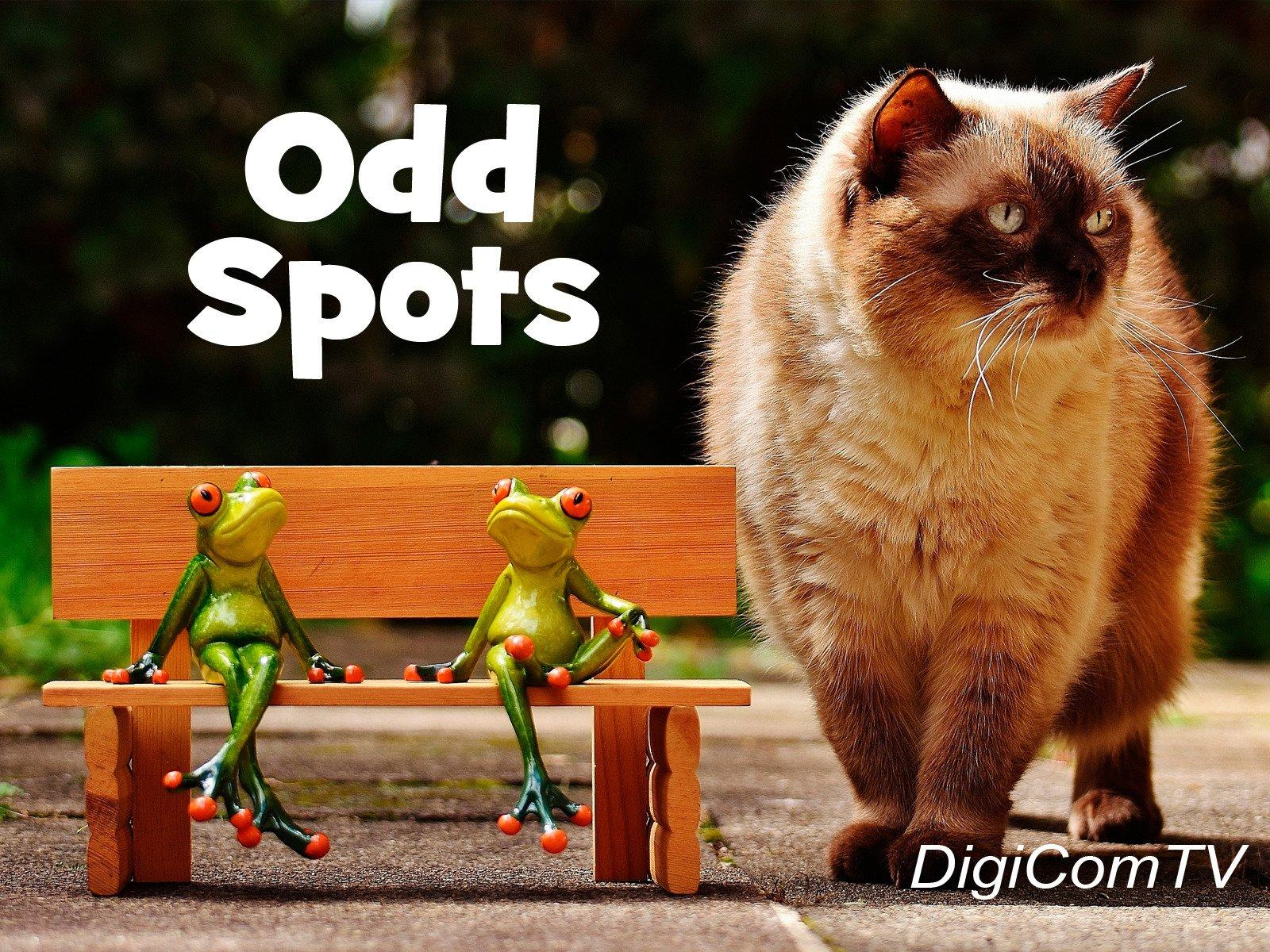 Odd Spots - Season 1