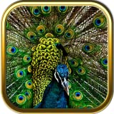 Peacock Jigsaw Puzzle Games