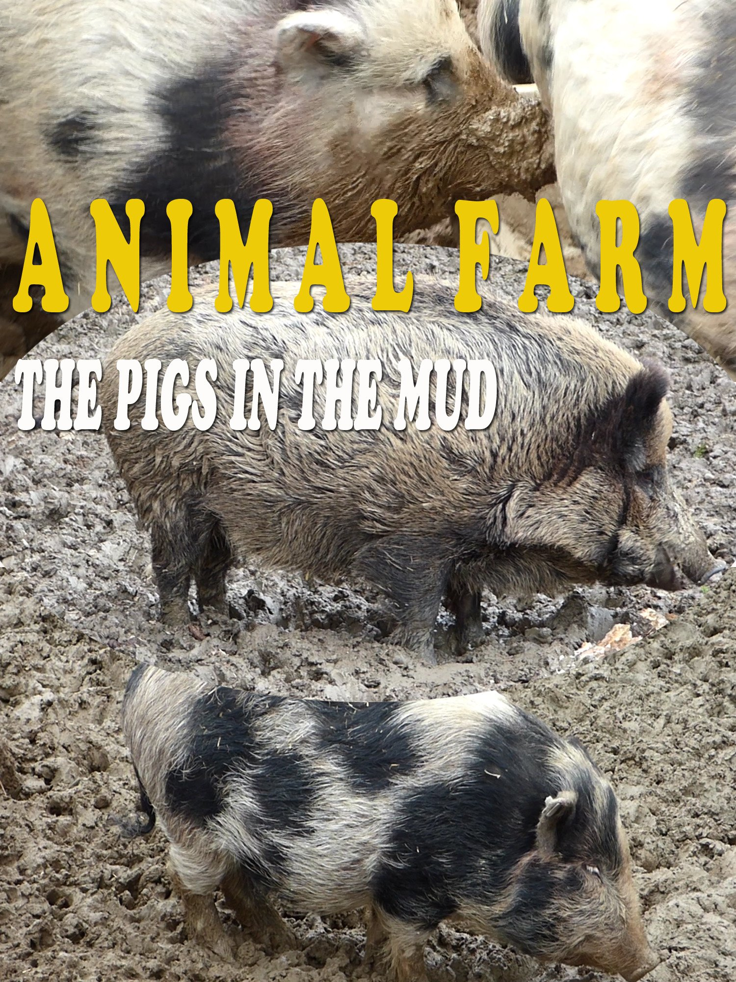 Animal farm. The pigs in the mud