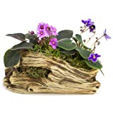 Natural Elements Log Planter (Trunk) – Realistic woodland-themed with intricate weathered bark detail + Fiber Soil + moss mulch. Grow small succulents, cactus, African Violets. Striking in any décor. (Color: Brown, Tamaño: Trunk Log)