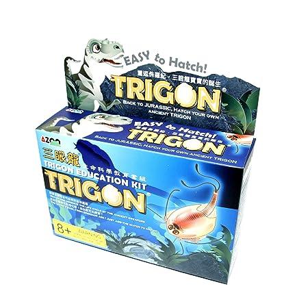 Azoo AZ05014 Trigon Kit Education