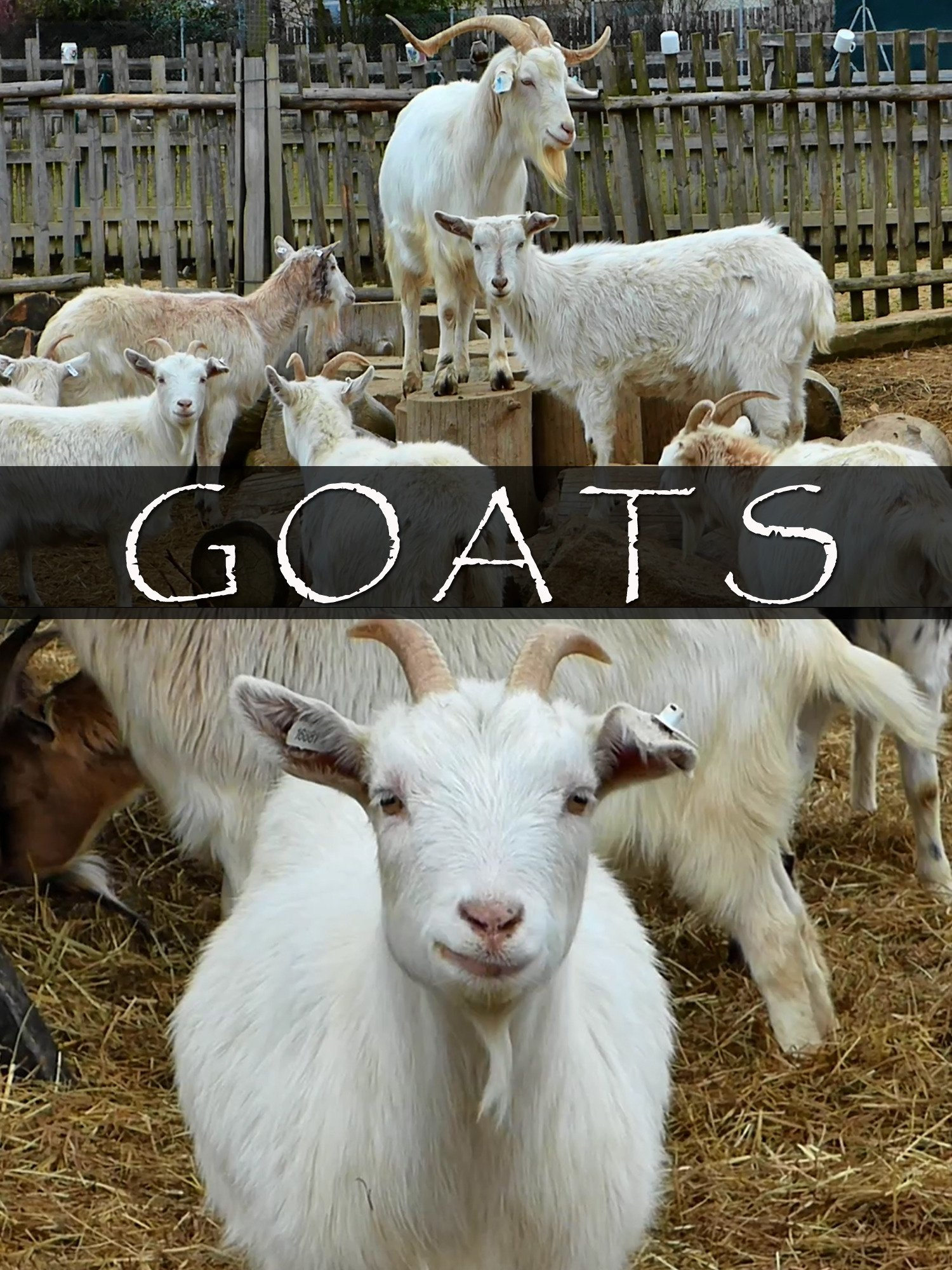 Goats on Amazon Prime Instant Video UK