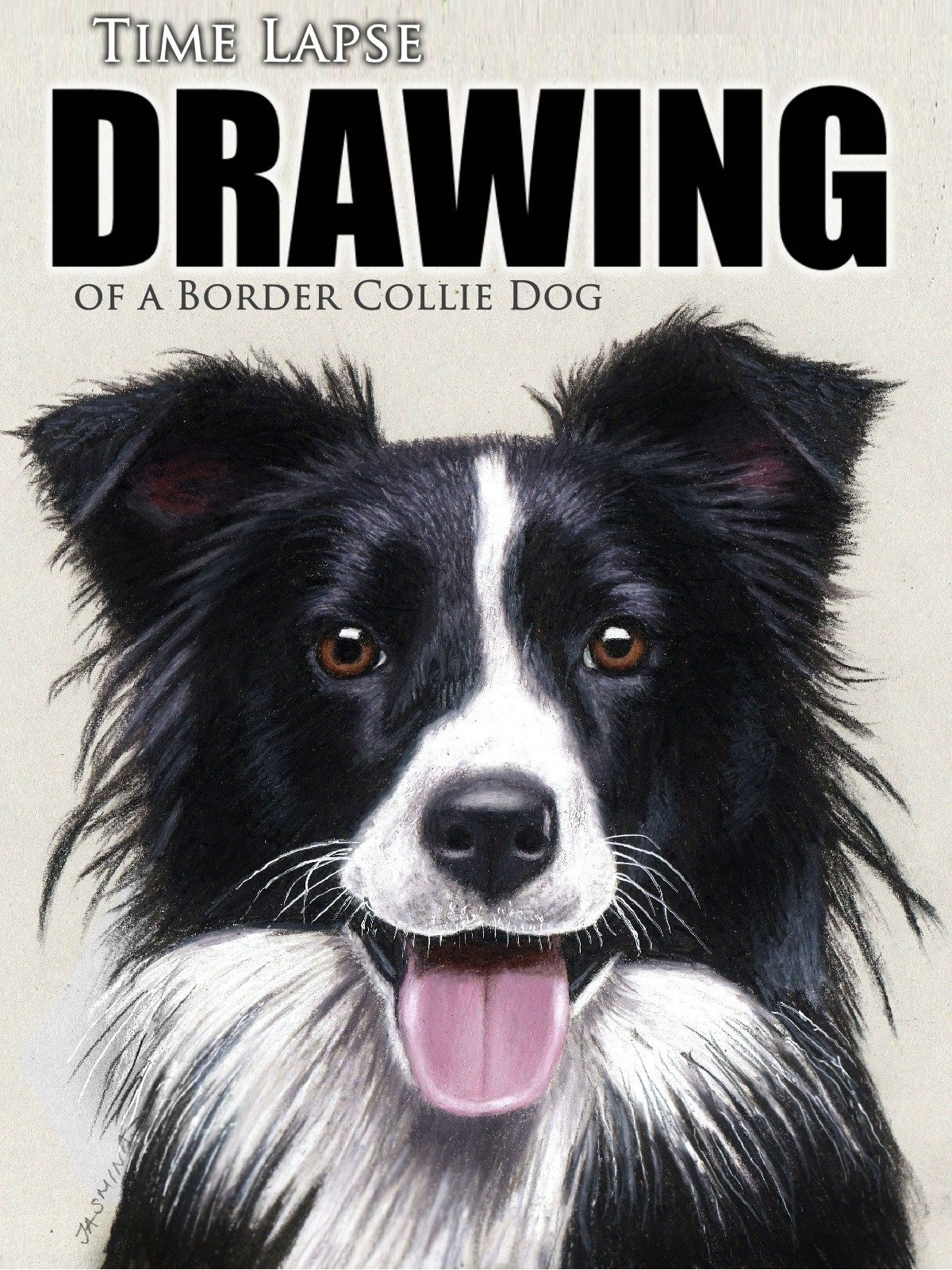 Clip: Time Lapse Drawing of a Border Collie Dog