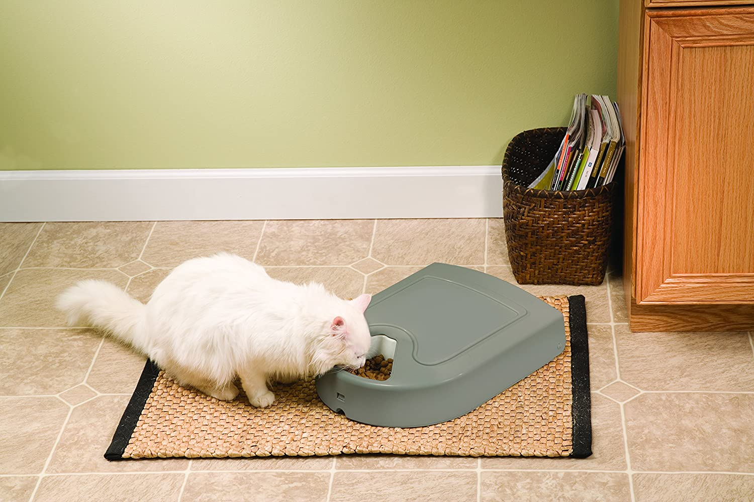 This is arguably the best automatic cat feeder within this price range.