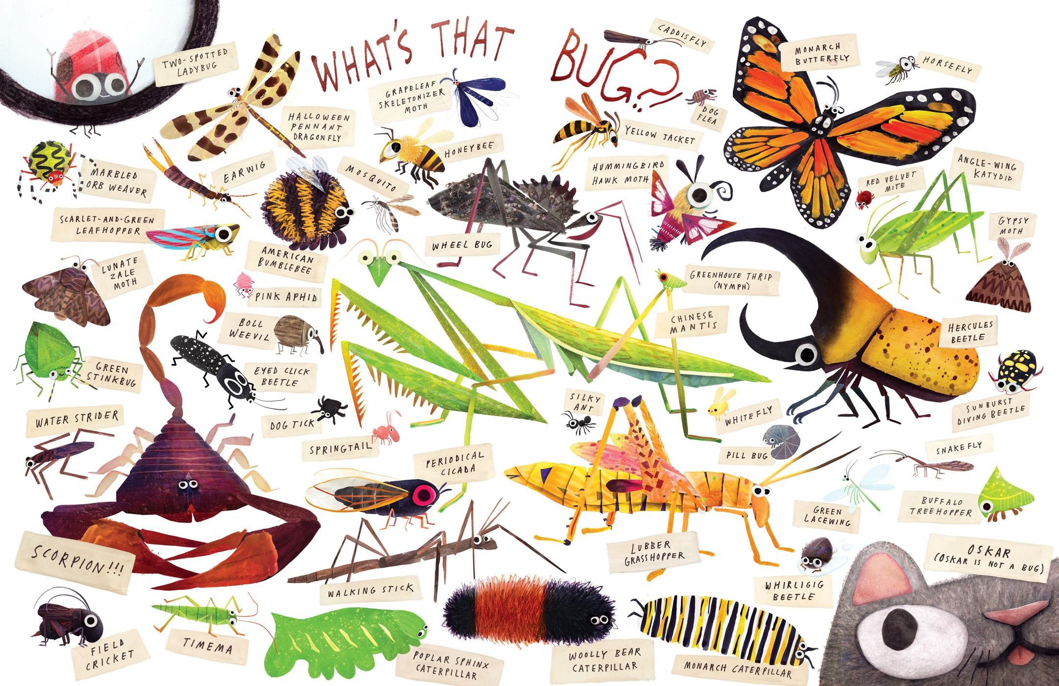 Buy Some Bugs Book Online At Low Prices In India  Some Bugs Reviews &  Ratings  Amazon