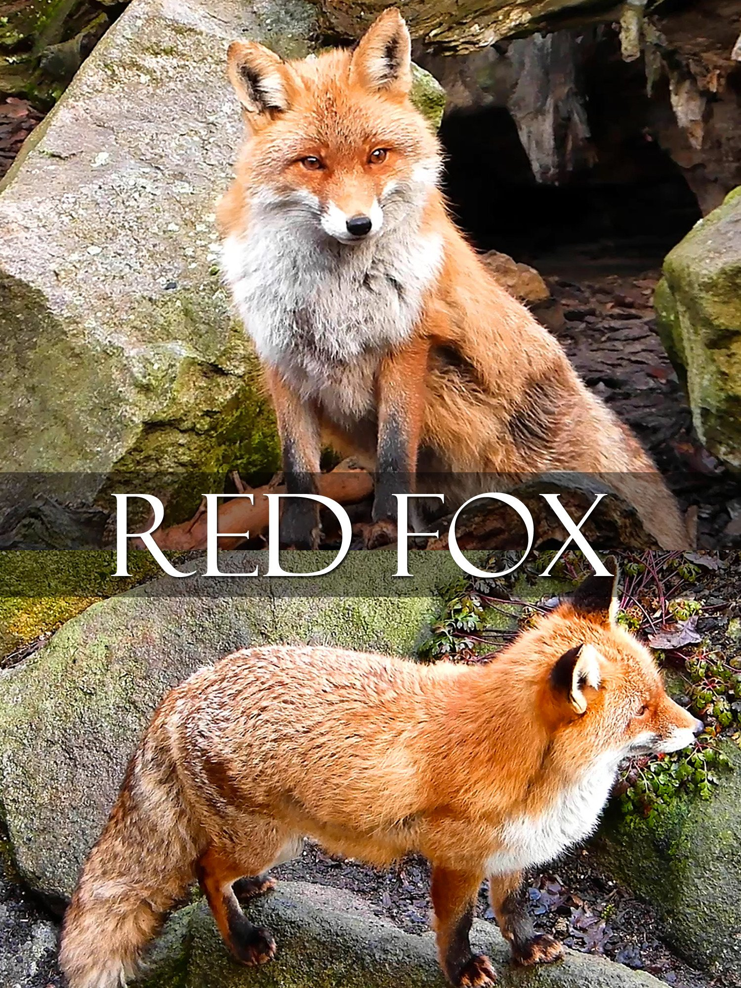 Red fox on Amazon Prime Instant Video UK