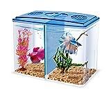 HAQOS 3 in 1 betta box and breeder box aquarium fish tank