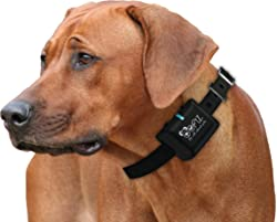 Image result for anti bark device for dogs