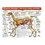 The Dog's Body Systems - A Double-Sided, UV Protected, Laminated Dog Anatomy Chart: A Learning and Teaching Chart For Veterinary Science Professionals, Veterninary Technicians, Dog Lovers and Breeders