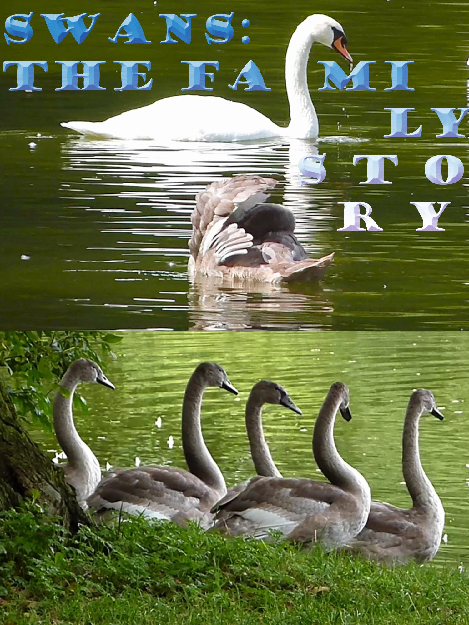 Swans: The family story