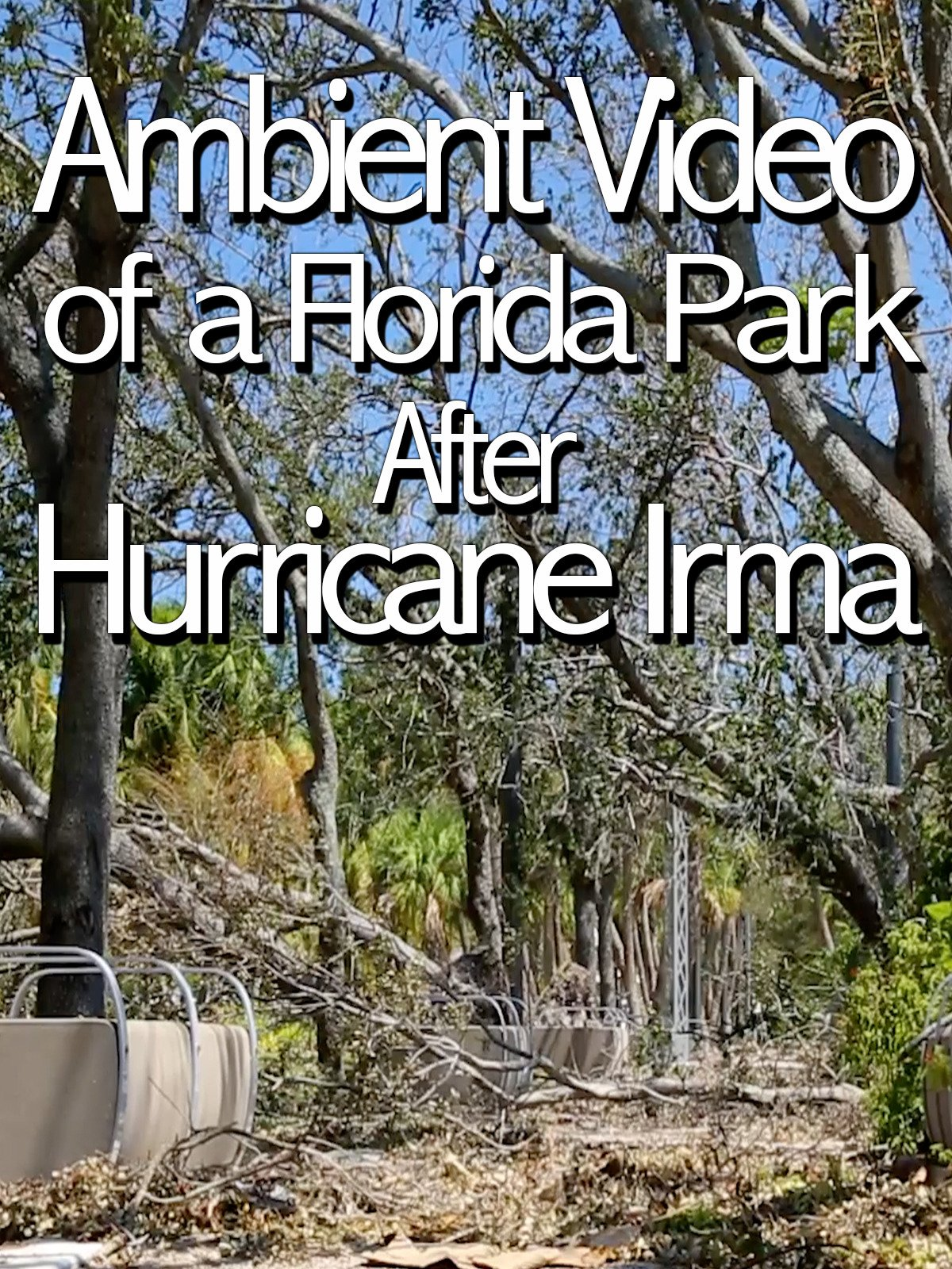 Ambient Video of a Florida Park After Hurricane Irma