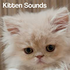 Kitten Sounds